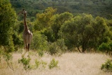 I always love watching the graceful and beautiful giraffes.