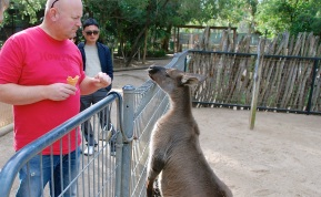 Dave and this large kangaroo having a staring contest.