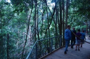 Loved this gorgeous rainforest walk.