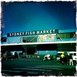 A visit to the Sydney Fish Market